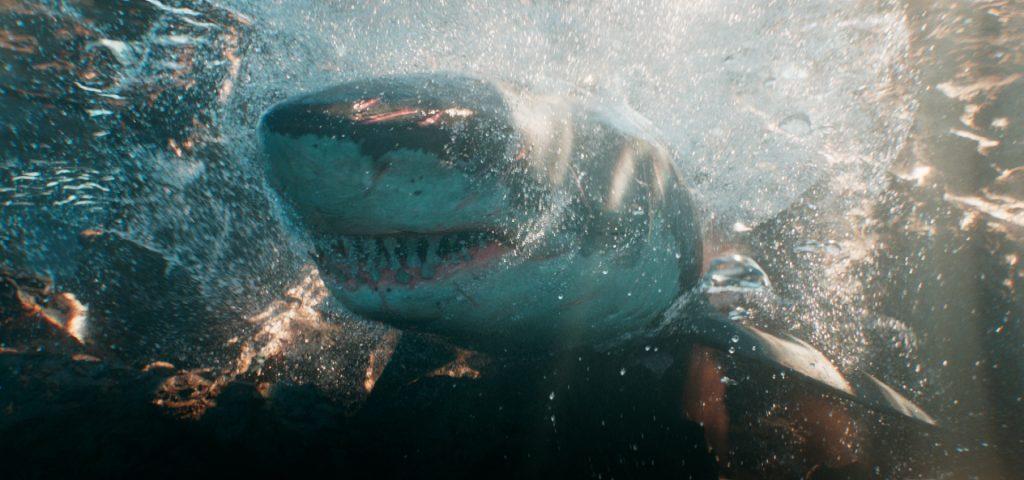 Advanced Water FX in Houdini Course - Shark Bubbles